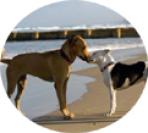 Profesionales caninos con experiencia